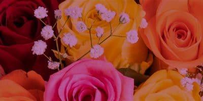 rose_bg